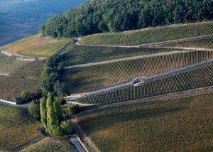 Vignes - Formaticus - Domaine Antonin Guyon